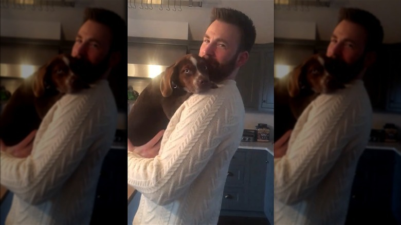 アリー・レイズマンの子犬を抱くクリス・エヴァンス